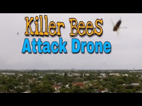 Killer Bees Attack My Drone | 2. Drone Diary | Road Warrior Life