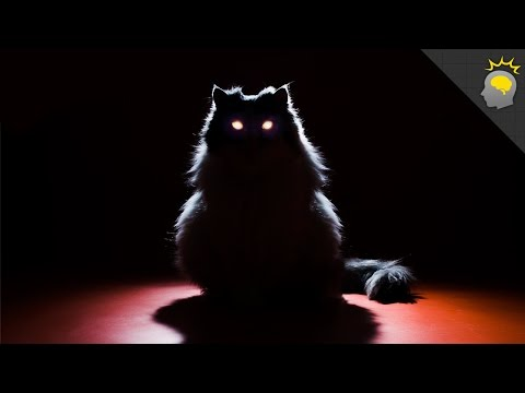Creepy Cat Eye Glow - Science on the Web #69