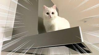 飼い主がいない寂しさで換気扇に登ってしまった猫…。