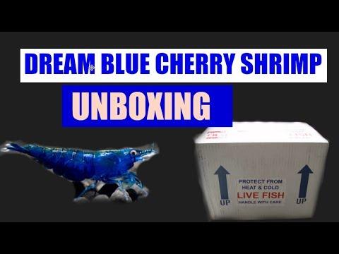 LIVE BLUE CHERRY SHRIMP UNBOXING!!!