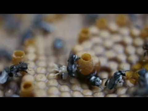 Bee Yourself - Native Stingless Bee Hives
