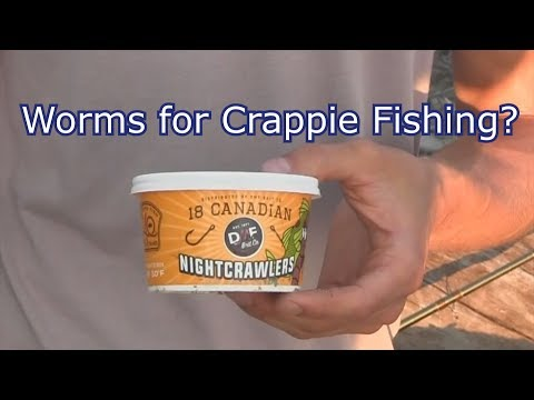 Crappie Fishing With Worms - Common Fishing Misconceptions