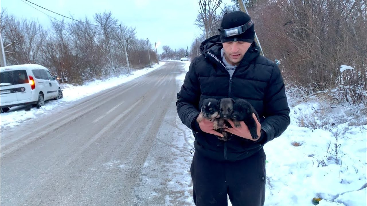 Rescue of a Homeless Mom and Her Puppies From Pipe