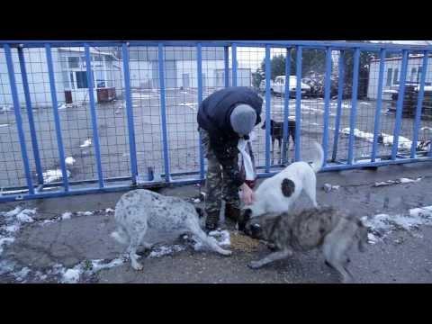 Stray Dog Rescuers - Romania - 2013 - subtitles