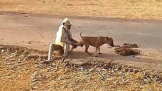 This monkey will going to break leg of this cute puppy - Funny