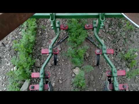 Planet Jr Bp1 walk behind tractor with single row cultivator in carrots