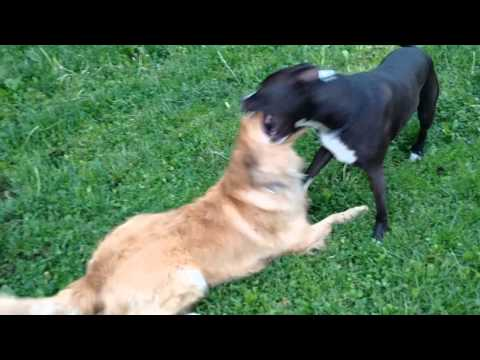 How to control rough play with dogs