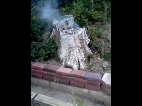 Bee Hive Tree Trunk Smokeout Using Burning Newspapers.  Hose in hand ready to put out fire.