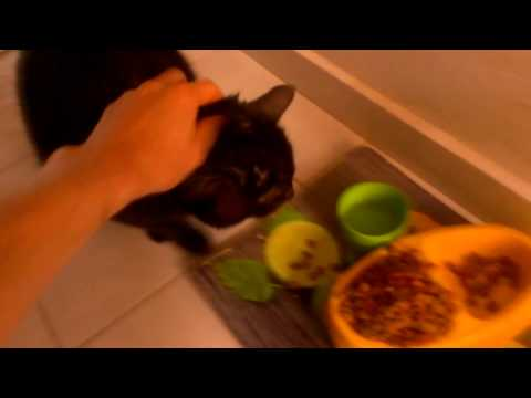 How To Make A Cat Fat And Then Make Him Lose Weight ? [ Short Film ]