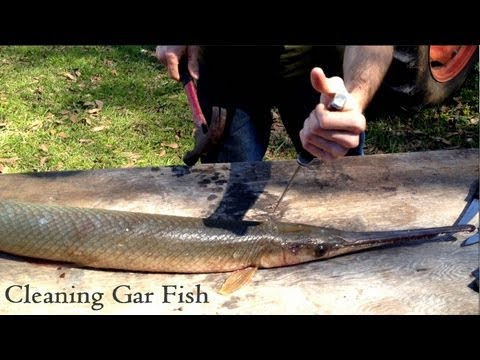 Cleaning Gar Fish