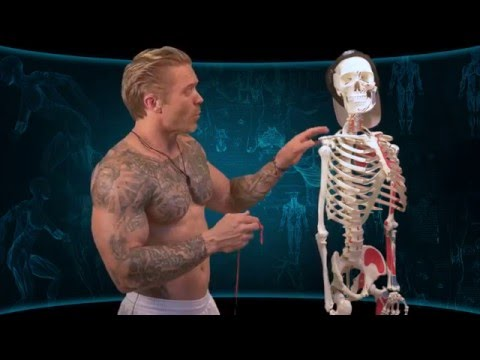 Building Biceps Peak | Targeting the Long Head of Biceps | Advanced Training #3