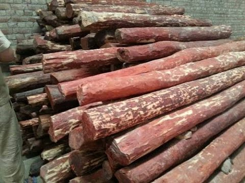 Xxx Mp4 Andhra Pradesh Police Raid Godown In Chennai Seize 3 5 Tonnes Of Red Sandalwood 3gp Sex