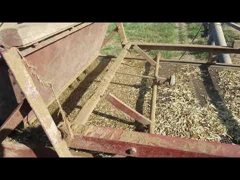 Cleaning hemp seed.