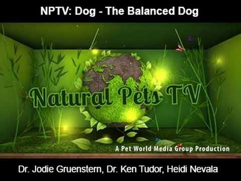 Natural Pets TV: Dog - The Balanced Dog - Balanced Vs Imbalanced Dogs & The Impact on Canine Health