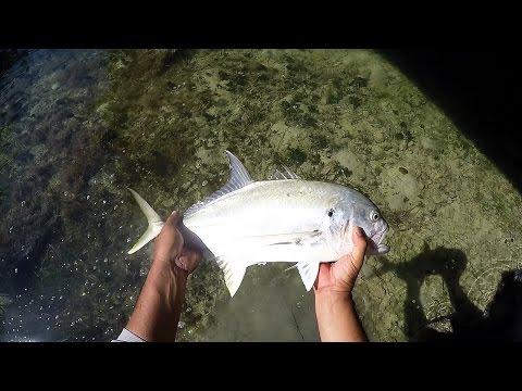 Bridge Fishing Basics - Baits and Rigs