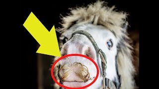 If You Ever Feel Sad, Just Remember That Horses Can Grow Moustaches !