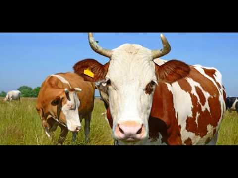 Mad Cow Disease The Best Treatment Options