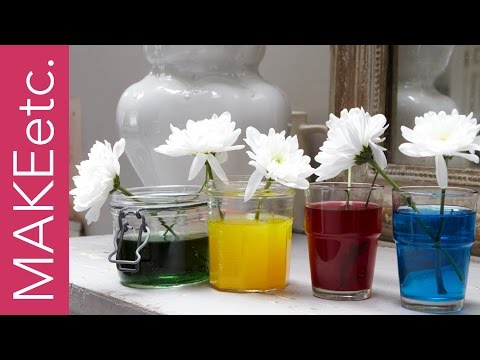 Kids' Science Experiment - How to turn white flowers into colourful carnations!