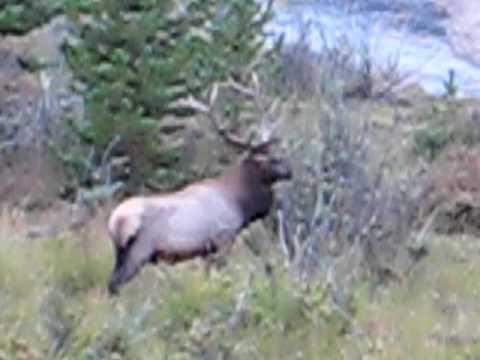 Rocky Mtn Nat Prk Elk Antler Cleaning
