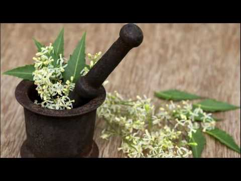 Neem Oil  Keeps Your Scalp Healthy How To Use At Home