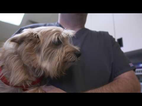 Metropolitan Veterinary Hospital Internship Program