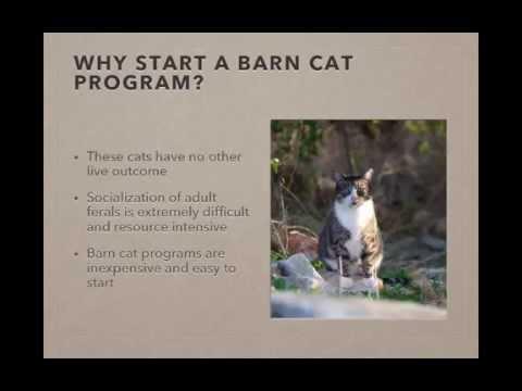 How to Create a Successful Barn Cat Program