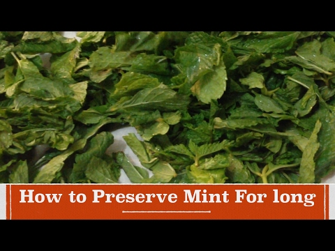 How to Preserve Mint for Long | How to Store Mint for over one year