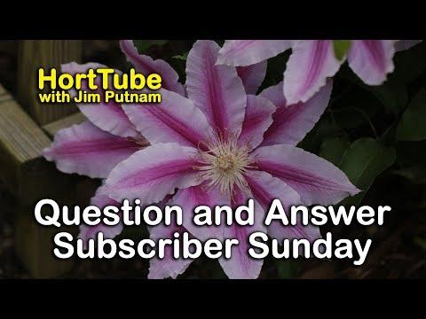Garden Question and Answer - Subscriber Sunday Photos