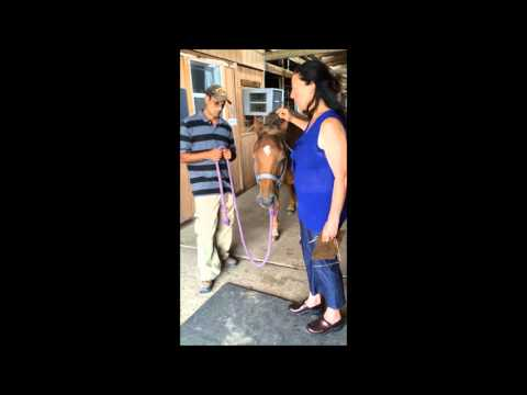 EFT on horse with Lymes disease and worries, takes on too much
