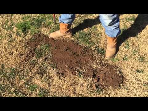 How to get rid of gopher using gopher bait, Gopher Control, Gopher removal