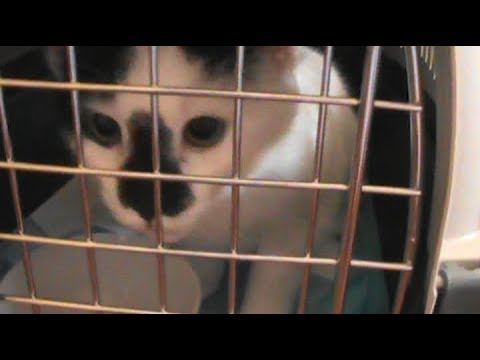 Kittens Go To The Clinic