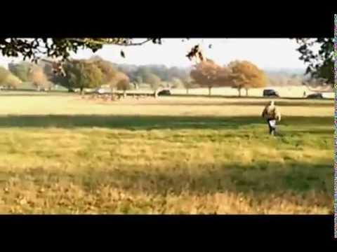 Fenton the dog chasing deer on news