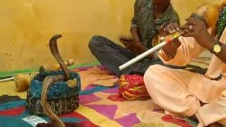 Snake charmers play music for 2 cobras in Jaipur, India.