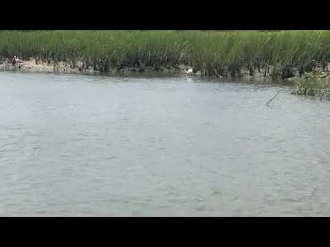 Spoonbills and White Pelicans