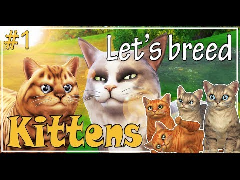 The Sims 4 Cats and Dogs - Gameplay - Let's play and breed kittens - Ep. 1 - We are pregnant!