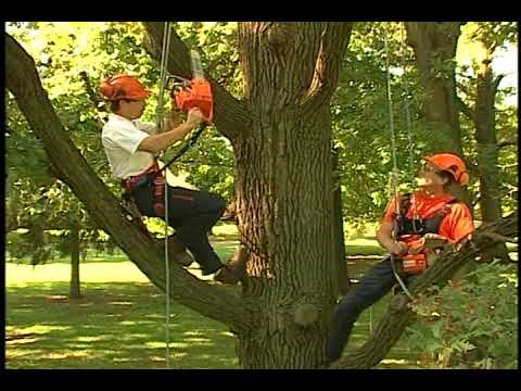 Chain Saw Safety in the Tree
