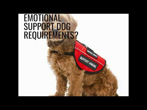 Emotional Support Dog (ESA Dogs) Guide - All You Need To Know!