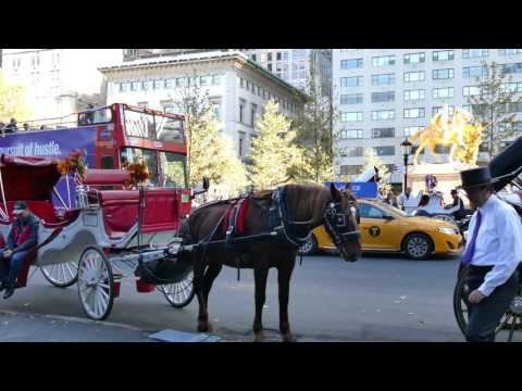 New York horse and carriage rides, Central Park South, Manhattan, NY, 4K video
