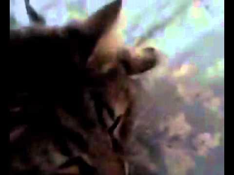 Xxx Mp4 Make Sex With Cat 3gp Sex
