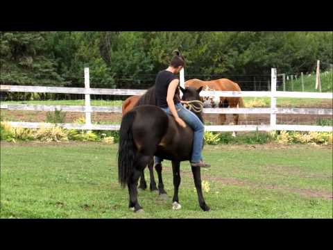 How to ride a wild horse in under 15 minutes