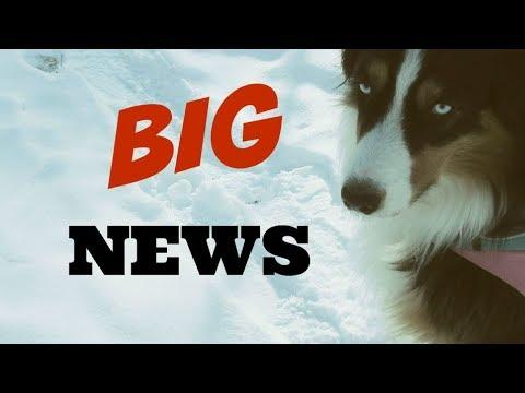 BIG Announcement |LifeWithAspen|