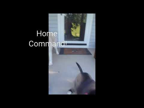 Home Command, a different kind of recall