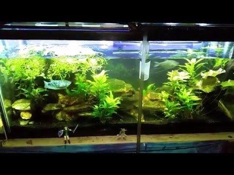 How to avoid Scratching your Aquarium Glass