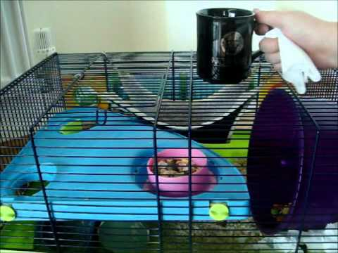 How to stop your hamster to bitting it's own cage