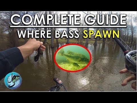 Where Do Bass Spawn? | Bass Fishing Seasonal Patterns