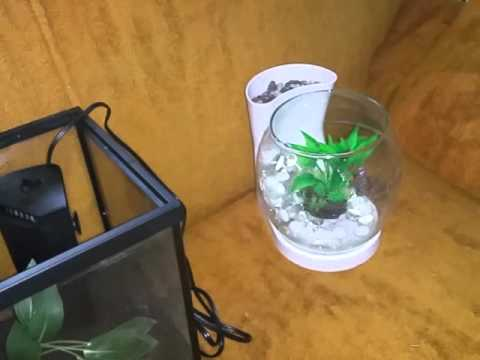 Why buy your betta a tank over a bowl
