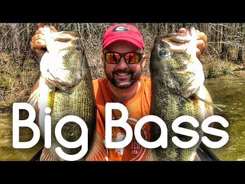 Two Giant Bass Fishing a Jackhammer Chatterbait