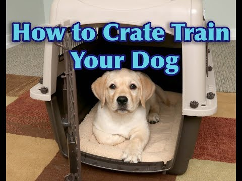 How To Crate Train Your PUPPY!