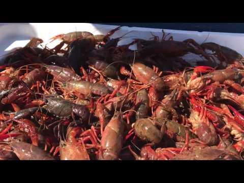 Alabama Cajun Crawfish Mudbug Boil - Outdoor Cooking Southern Style