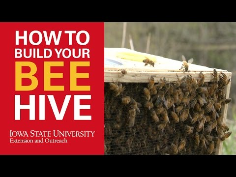 How to Build a Beehive for Beekeeping